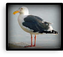 The Sea Gull By The Bay Canvas Print