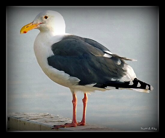The Sea Gull By The Bay by Scott Riley