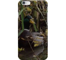 a wild duck appeared  iPhone Case/Skin
