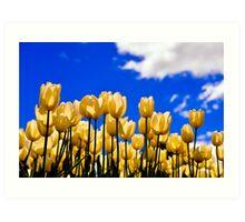 tulips under white Art Print