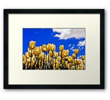 tulips under white Framed Print