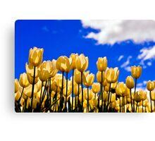 tulips under white Canvas Print