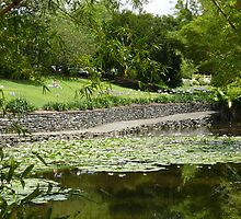 Lily pond, Brisbane Botanic Gardens, Queensland by krista121