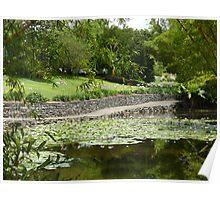 Lily pond, Brisbane Botanic Gardens, Queensland Poster