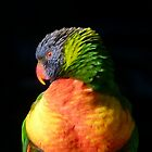 Rainbow Lorikeet by Trish Meyer