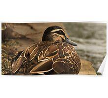 Fat Duck Poster