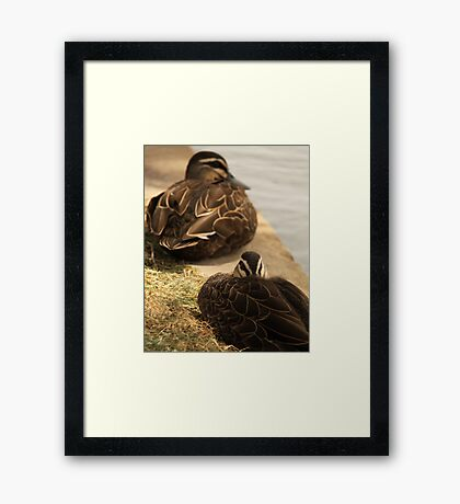 Hide-My-Bill Duck Framed Print