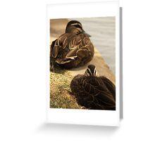 Hide-My-Bill Duck Greeting Card