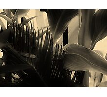 Shapes and Textures of Leaves Photographic Print