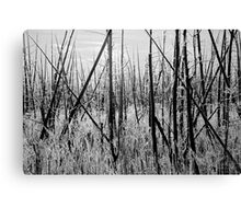 Frosty Morning - Black and White 2, Dunrobin Ontario Canvas Print