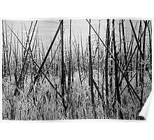 Frosty Morning - Black and White 2, Dunrobin Ontario Poster