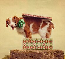 Good Things Come In Small Packages by Helen Green
