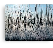 Frosty Morning - Colour 3, Dunrobin Ontario Canvas Print