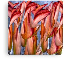 Dance of the crazy Tulips  Canvas Print