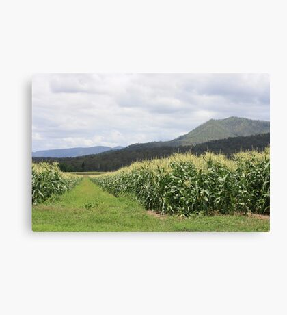 Corn Fields of South Laidley Canvas Print
