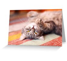 Kitty Cat Nap Greeting Card