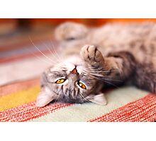Kitty Cat Nap Photographic Print