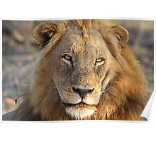 Majigilane male (The Sabi Sands will soon belong to our coalition) Poster