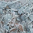 Jack Frost by Carolann23