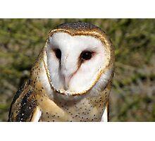 Barn Owl ~ Portrait Photographic Print