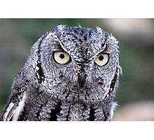 Western Screech-Owl Photographic Print
