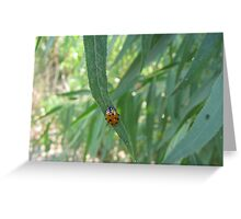 Convergent Lady Beetle Greeting Card