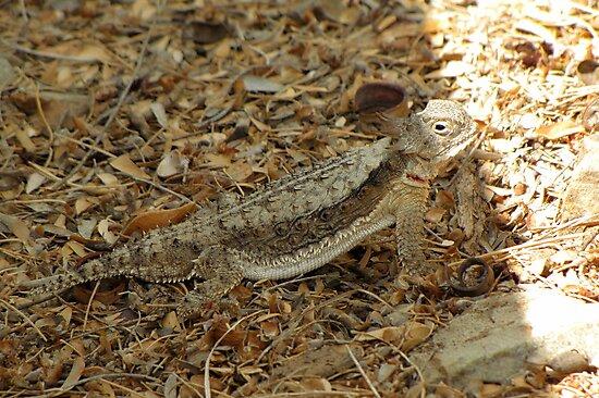Horned Lizard ~ Desert by Kimberly Chadwick