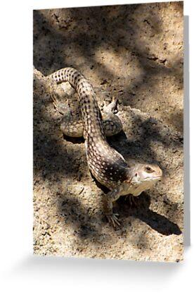 Desert Iguana by Kimberly Chadwick