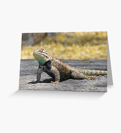 Desert Spiny Lizard ~ Male Greeting Card