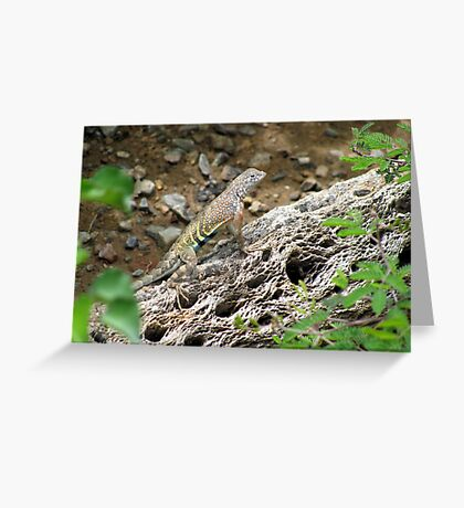 Greater Earless Lizard ~ Male Greeting Card