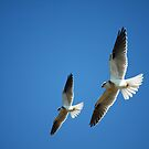 Kite Duo by byronbackyard