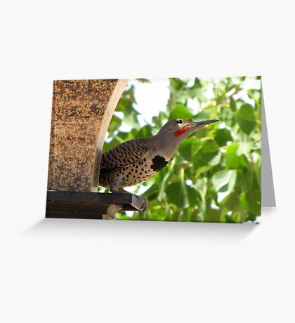 (BFF's) Gilded Flicker ~ Male  Greeting Card