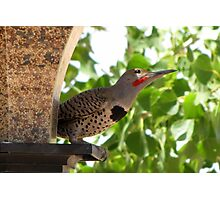 (BFF's) Gilded Flicker ~ Male  Photographic Print