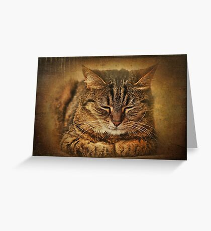 If you want to learn how to relax, study a cat! Greeting Card