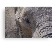 African Wildlife - Elephants Eye Canvas Print