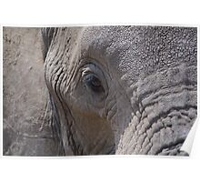 African Wildlife - Elephants Eye Poster