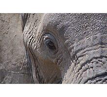 African Wildlife - Elephants Eye Photographic Print