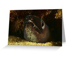 Swansea Eel Greeting Card