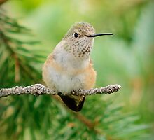 Humming Bird by Kgphotographics