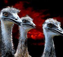 three wise men by carol brandt