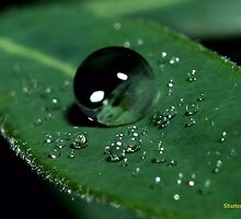Water Drops on a Leaf by Alfredo Encallado