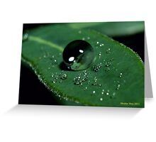 Water Drops on a Leaf Greeting Card