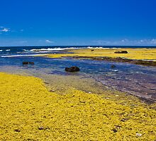 Yellow Reef by Dean Cunningham