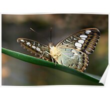 Under my Wings Clipper - Parthenos sylvia Poster
