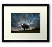 A Tree For Christmas Framed Print