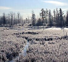 Frosty Morning - Beaver Pond, Dunrobin, Ontario by Debbie Pinard