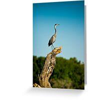 Black headed Heron - Perched Greeting Card