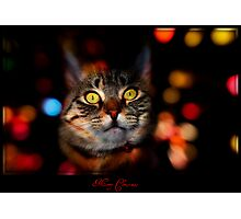 Merry Christmas!! Photographic Print