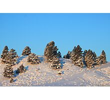 Winter Trees Photographic Print