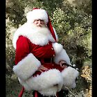 Sonoran Santa Clause by Kimberly Chadwick